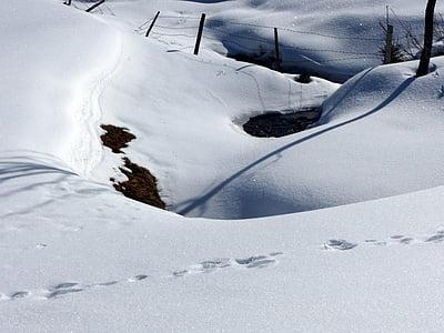 snow grips, shadow, snowed in, white, wintry, snowy, winter