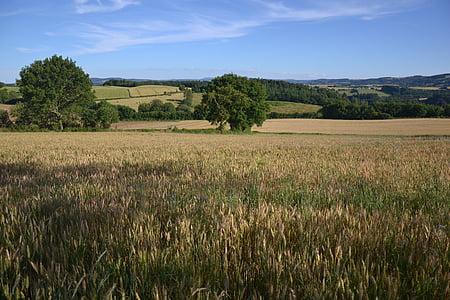 Príroda, pšenica, kukuričnom poli, EPI, Príroda, Francúzsko, Fleurs des champs