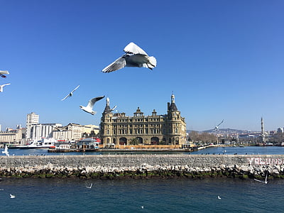 istanbul, station, seagull