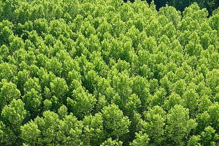 forest, trees, environment, scenery, leaves, foliage, forest trees