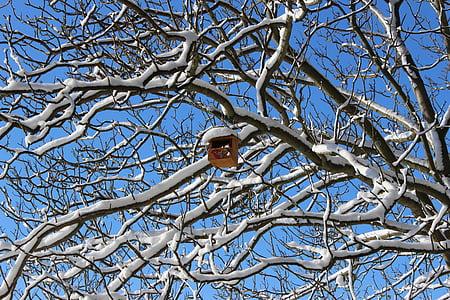 aviary, snow, cold, snowy, winter dream, wintry, winter