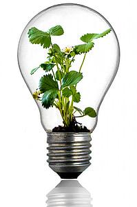 bombeta, creixement, planta, llum, verd, fulla, global
