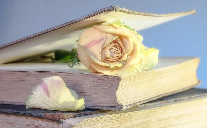 a crescut, Cartea, carte veche, floare, floare, Rosenblatt, folosit