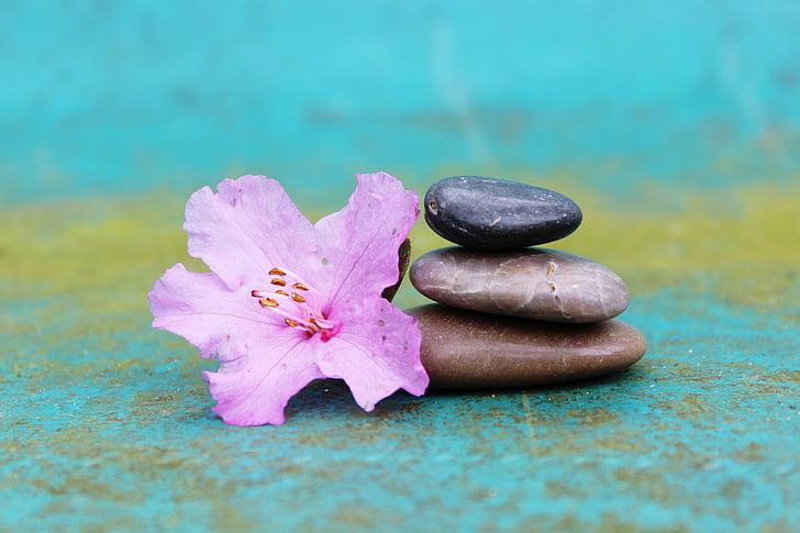 ดอกชวนชม, หินกอง, กองซ้อน, หิน, ดอก, บาน, สีชมพู