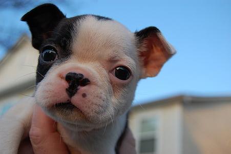 puppy, cute, dog, cute puppy, animal, canine, pet