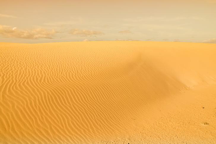 deserto, Duna, areia, natureza, calor, areia, sobrevivência