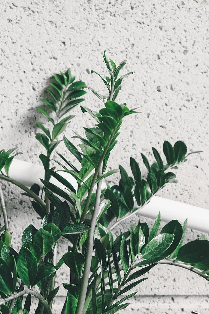 tancar, fotos, verd, fulla, planta, natura, paret