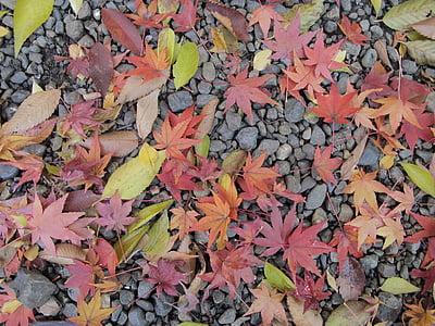 maple leaf, japan, ground, nature, autumn, leaf, season