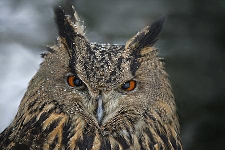 독수리 올빼미, 동물 초상화, 새, 올빼미, 동물, 야생 동물, 자연
