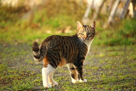 cat, kitten, mackerel, young cats, domestic cat, cat portrait