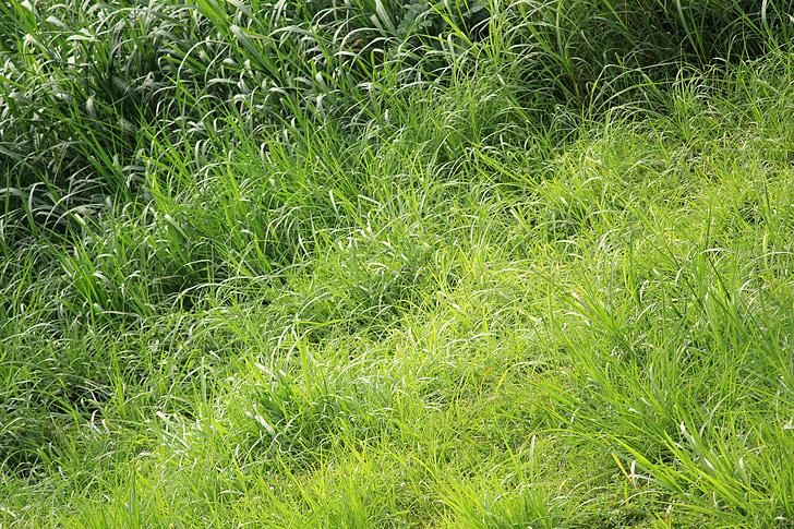 zelené listy, listy, vzor, Zelená, Leaf, zelené pozadie, zelenú trávu pozadia