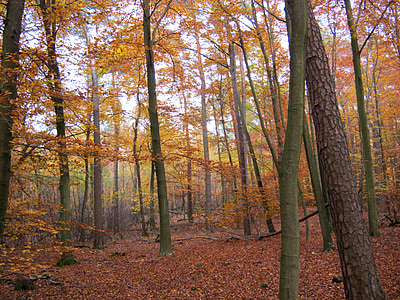 geç sonbaharda, sonbahar orman, Cadılar Bayramı, yaprakları, Sonbahar, ortaya, sonbahar yaprakları