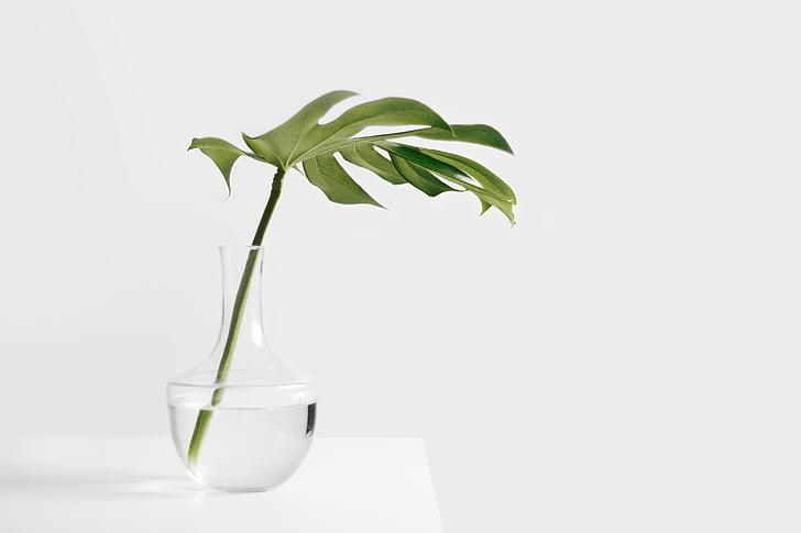 groen, blad, vaas, nog steeds, items, dingen, plant