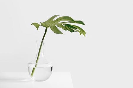 verd, fulla, Gerro, encara, elements, coses, planta