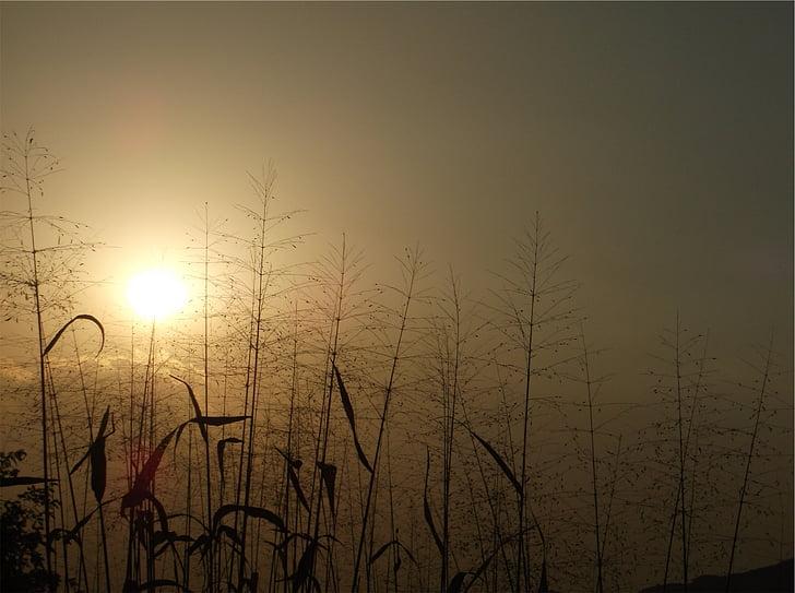posta de sol, capvespre, plantes