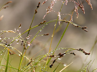 草, 植物, 露水, 露珠, 自然, 滴灌