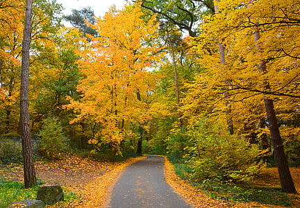automne, couleurs d'automne, forêt d'automne, Forest, suite, automne doré, feuilles d'automne
