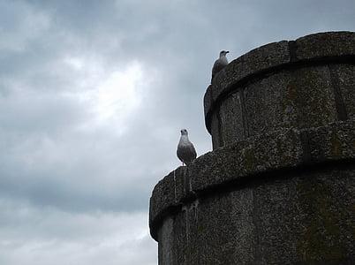 seagull, tower, clouds, watchmen, bird