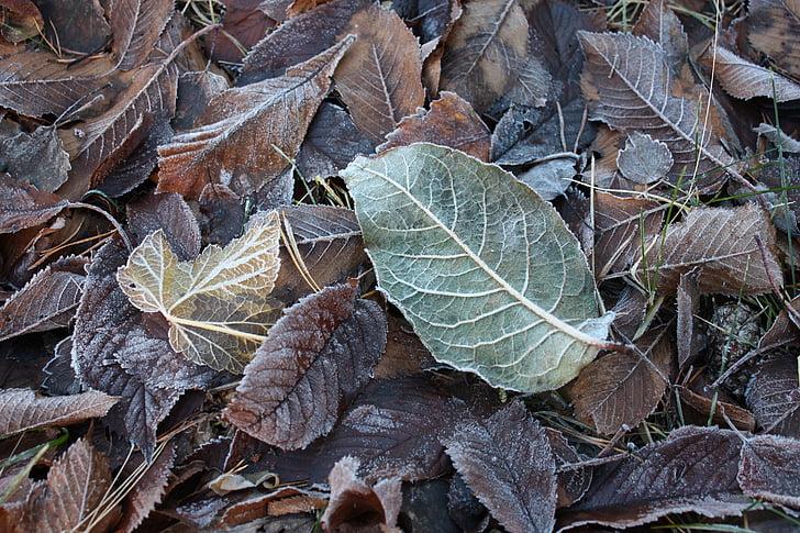 frost, nature, winter, leaf, lövhög