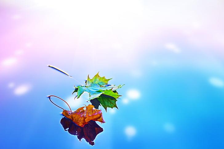 tardor, tardor, fulles, temporada, l'aigua, reflexió, fulla