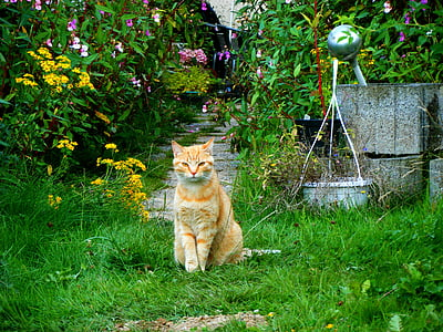 cat, garden, red cat, domestic cat, pet, young cat, one animal