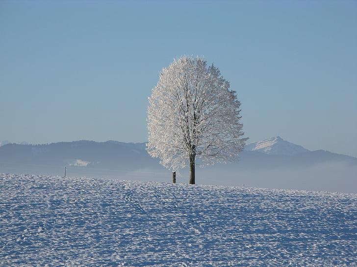 talvel, lumi, valge, külm, taevas, puu, lumine