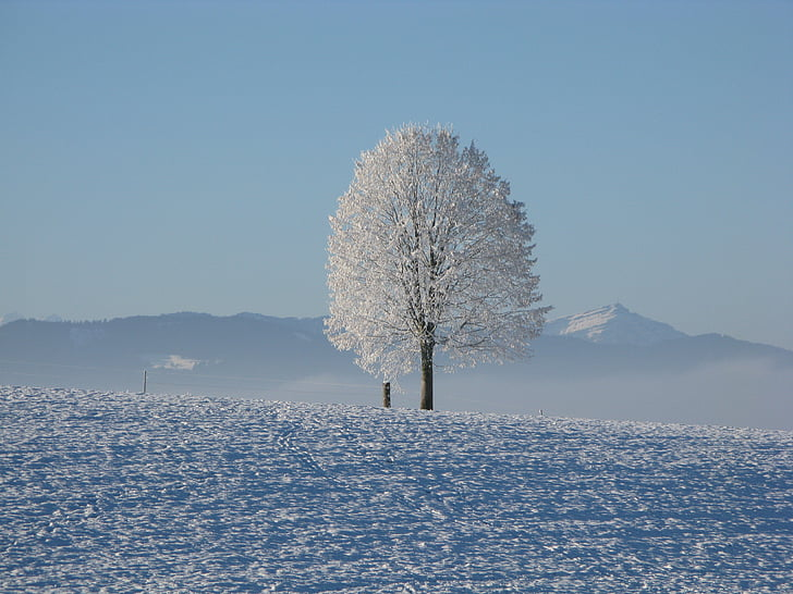 hiver, neige, blanc, froide, Sky, arbre, neigeux