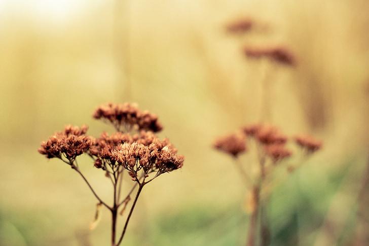 l'hivern, flor, sec, decoració, marró