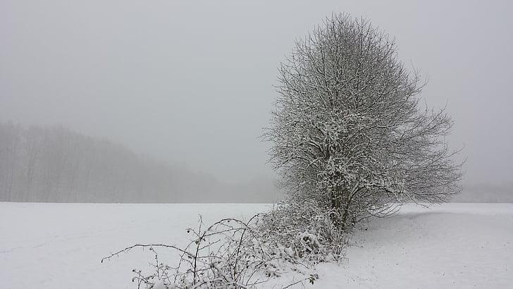 winter, landscape, snow, tree, wintry, forest, field