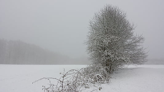 Inverno, paisagem, neve, árvore, invernal, floresta, campo
