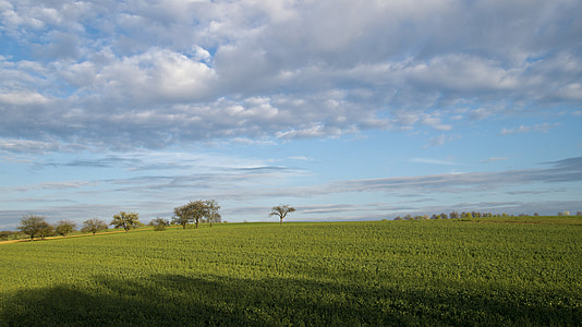природата, земя, поле, селски, полета, небе, дърво