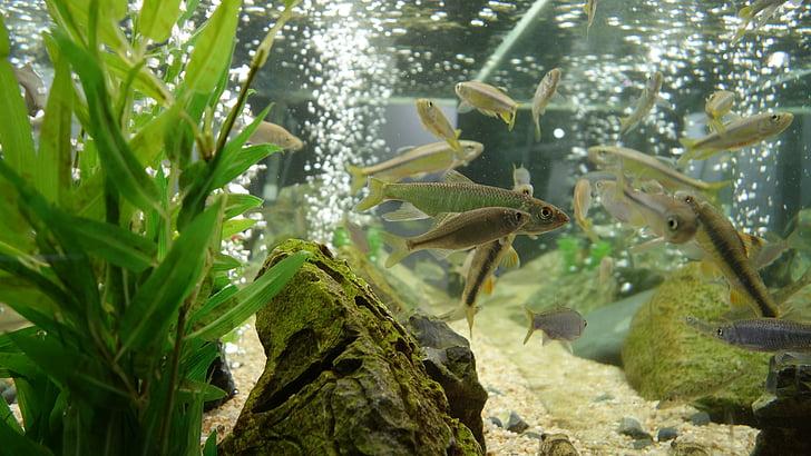 fish tank, fish, aquarium, tropical fish