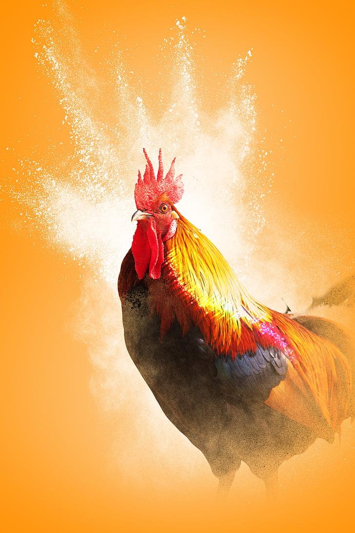 петел, годината на петела, птица, пера, светъл, жълт фон, силует