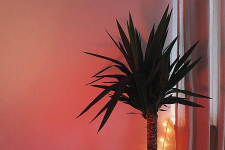 màu xanh lá cây, trong nhà, thực vật, cây cọ, Phòng, Trang trí, màu đỏ
