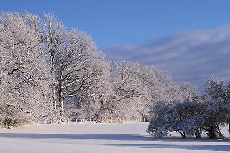 winter, snow, wintry, winter forest, snowy, trees, winter dream