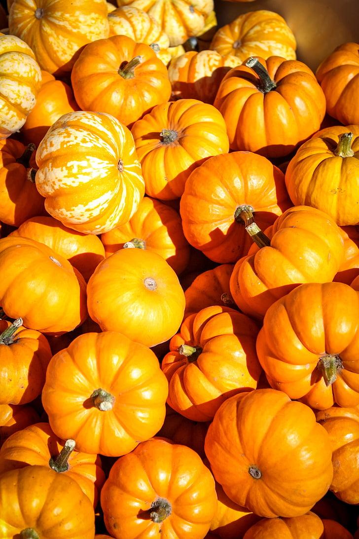 Halloween, ķirbji, rudens, kritums, oranža, oktobris, ražas