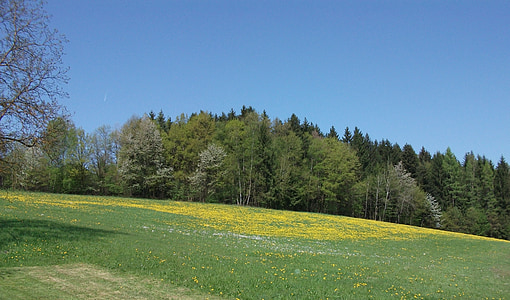 Meadow, rừng, Thiên nhiên, màu xanh lá cây, Hoa, cảnh quan, cây