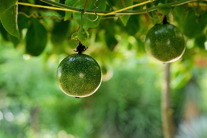 fruita de la passió, fruita, vegetals, aliments, tropical, planta, fruits tropicals