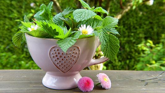 urter, blader, blomster, tekopp, hjerte, tusenfryd, sunn