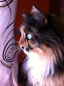 cats, felines, cat, feline, animal, spotted, plush