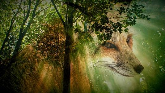 fuchs, animal, forest, wild animal, animal portrait, animal world, nature