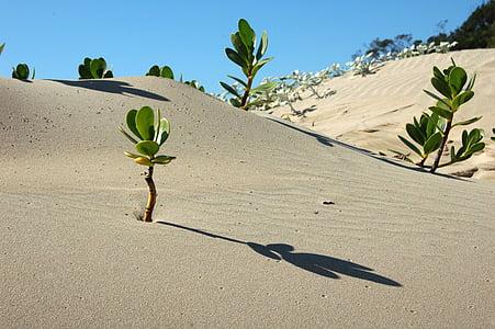 Afrika, krajina, poušť, scenérie, Příroda, suché, písek
