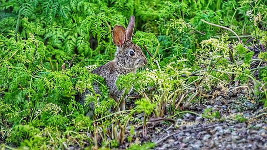 zec, zec, zeko, životinja, biljni i životinjski svijet, priroda, prirodni