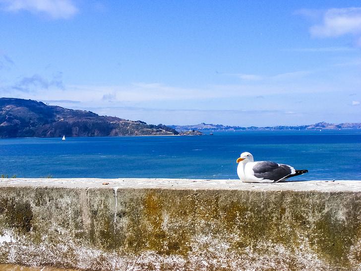 Kajakas, lind, Feather, vee, Ocean, Seagulls, Vaikse ookeani