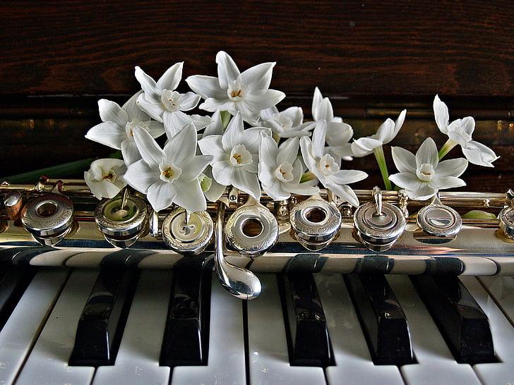 piano, flauta, narcisy, kvety, kľúče, čierna, biela