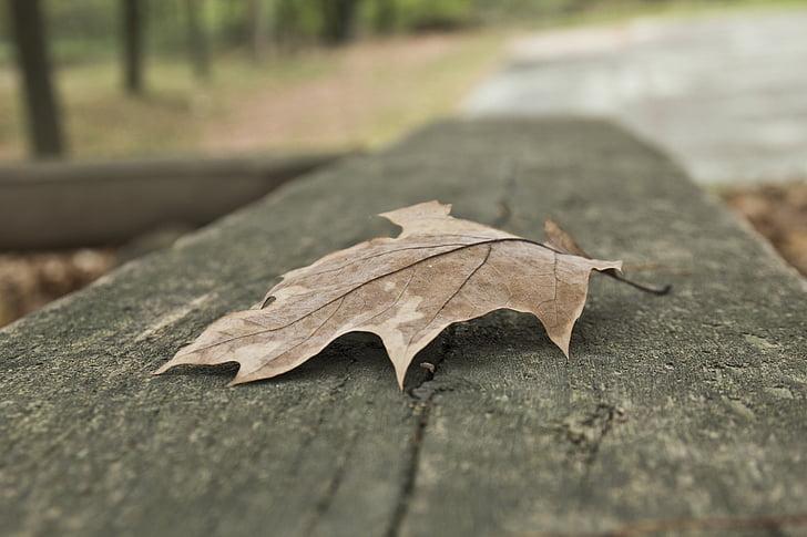 fulla, tardor, tardor, natura, temporada
