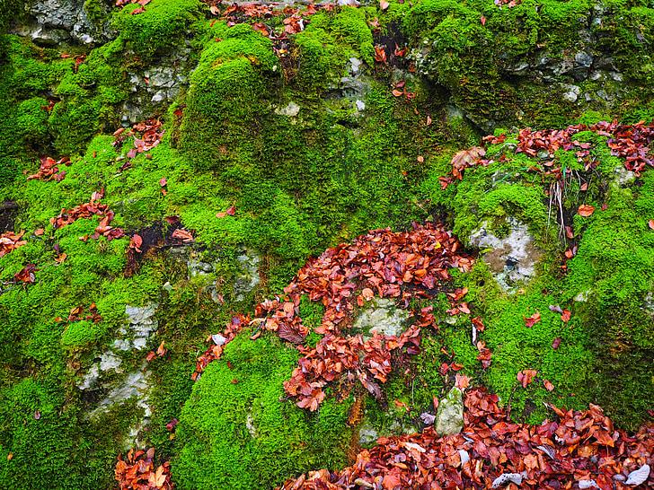 pedres, fulles, tardor, molsa, bemoost, verd, cobert