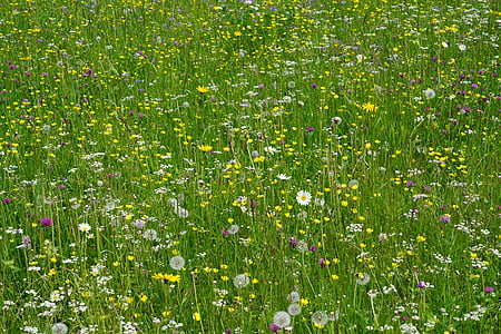 meadow, flowers, field, colorful, summer, nature, spring