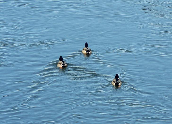 patke, Rijeka, tri, igre