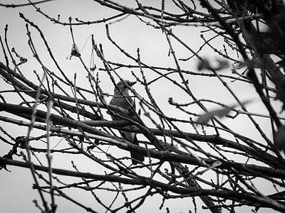 bird, branches, darkness, gloomy, black white, autumn